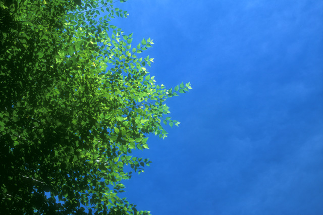 Blue Sky adf Green Leaves